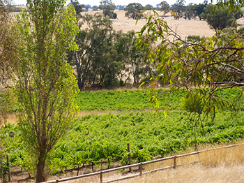 photo of bright green vines at wild duck creek